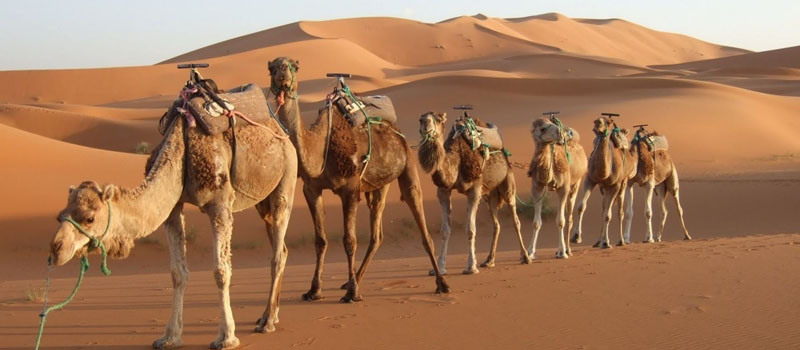 Best Rajasthan Holidays and Tour Packages
